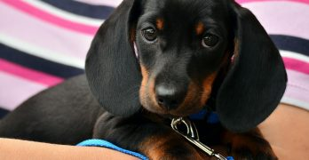 The 6 Free Apps for Dog Owners Everywhere