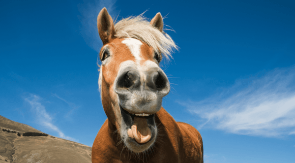 Funny Clips Horse with Funny Smile